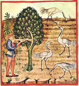 Chasse à la grue au Moyen Age. Source : http://data.abuledu.org/URI/50ca0482-chasse-a-la-grue-au-moyen-age