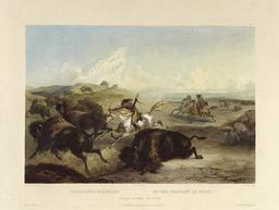 Chasse aux bisons en 1834. Source : http://data.abuledu.org/URI/564cd764-chasse-aux-bisons-en-1834