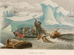 Chasse aux morses en 1866. Source : http://data.abuledu.org/URI/59459d56-chasse-aux-morses-en-1866