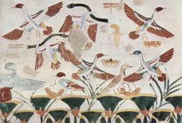 Chasse aux oiseaux dans l'ancienne Égypte. Source : http://data.abuledu.org/URI/535a5d2d-chasse-aux-oiseaux-dans-l-ancienne-egypte