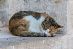 Chat endormi au soleil. Source : http://data.abuledu.org/URI/551ed2ca-chat-endormi-au-soleil
