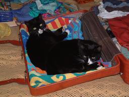 Chats allongés sur une serviette de plage. Source : http://data.abuledu.org/URI/52d84bfb-chats-allonges-sur-une-serviette-de-plage