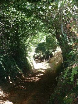 Chemin creux dans l'Orne. Source : http://data.abuledu.org/URI/532e9c41-chemin-creux-dans-l-orne