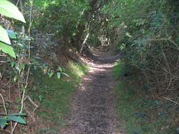 Chemin creux en Australie. Source : http://data.abuledu.org/URI/532e9d05-chemin-creux-en-australie