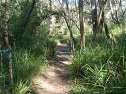 Chemin de randonnée en Australie. Source : http://data.abuledu.org/URI/532e9db3-chemin-de-randonnee-en-australie