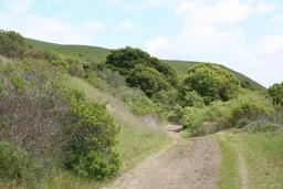 Chemin de terre. Source : http://data.abuledu.org/URI/532e99b2-chemin-de-terre