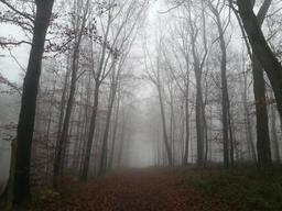 Chemin forestier dans la brume en hiver. Source : http://data.abuledu.org/URI/54cd031a-chemin-forestier-dans-la-brume-en-hiver
