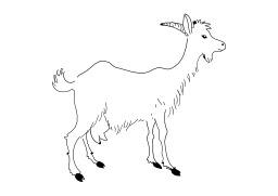 Chèvre. Source : http://data.abuledu.org/URI/50252555-chevre