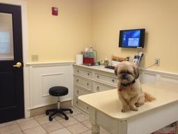 Chien chez un vétérinaire. Source : http://data.abuledu.org/URI/53b09628-chien-chez-un-veterinaire