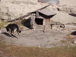 Chien enchaîné à sa niche. Source : http://data.abuledu.org/URI/53966229-chien-enchaine-a-sa-niche