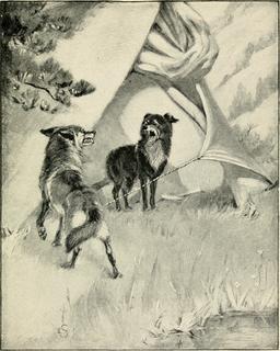 Chien et coyote. Source : http://data.abuledu.org/URI/587e9c68-chien-et-coyotte