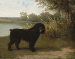Chien jouant au bord d'un étang. Source : http://data.abuledu.org/URI/520e41a1-chien-jouant-au-bord-d-un-etang