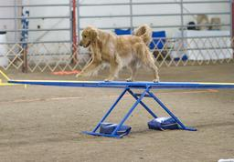 Chien sur une balançoire. Source : http://data.abuledu.org/URI/5314c319-chien-sur-une-balancoire