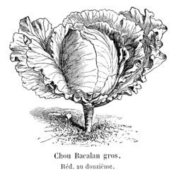 Chou de Bacalan. Source : http://data.abuledu.org/URI/546228e7-chou-de-bacalan