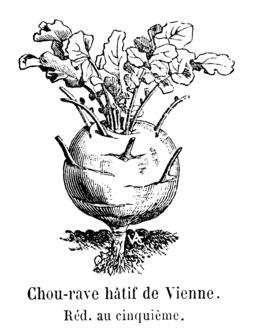 Chou-rave hâtif de Vienne. Source : http://data.abuledu.org/URI/546d2658-chou-rave-hatif-de-vienne