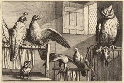 Chouettes et faucons. Source : http://data.abuledu.org/URI/54b2f3b4-chouettes-et-faucons