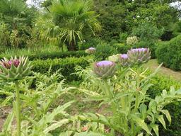 Choux en fleurs dans le parc du Château Malleret à Cadaujac. Source : http://data.abuledu.org/URI/594ea58c-choux-en-fleurs-dans-le-parc-du-chateau-malleret-a-cadaujac