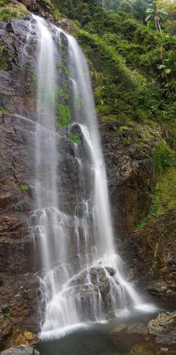 Chutes de Cedar dans le parc Dorrigo en Australie. Source : http://data.abuledu.org/URI/54da843d-chutes-de-cedar-dans-le-parc-dorrigo-en-australie
