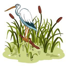 Cigogne dans les roseaux. Source : http://data.abuledu.org/URI/5629f780-cigogne-dans-les-roseaux