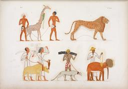 Cinq quadrupèdes égyptiens. Source : http://data.abuledu.org/URI/58530016-cinq-quadrupedes-egyptiens