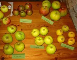 Cinq variétés de pommes. Source : http://data.abuledu.org/URI/518a0c53-cinq-varietes-de-pommes