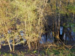 Le printemps à Pujols/Ciron. Source : http://data.abuledu.org/URI/58daef77-le-printemps-a-pujols-ciron