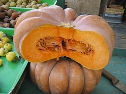 Citrouille. Source : http://data.abuledu.org/URI/47f50b9b-citrouille