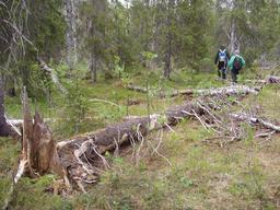 Clairière naturelle en Norvège. Source : http://data.abuledu.org/URI/582ea165-clairiere-naturelle-en-norvege