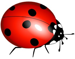 Coccinelle. Source : http://data.abuledu.org/URI/540451d1-coccinelle