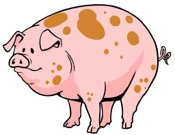 Cochon rose. Source : http://data.abuledu.org/URI/5049c602-cochon-rose