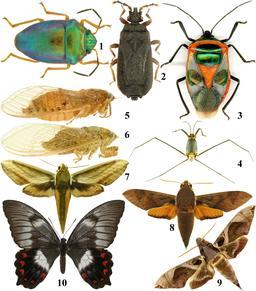 Coléoptères et papilons de Vanikoro. Source : http://data.abuledu.org/URI/59907c49-coleopteres-et-papilons-de-vanikoro