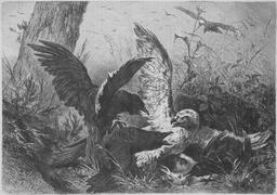 Combat d'oiseaux. Source : http://data.abuledu.org/URI/58b31426-combat-d-oiseaux