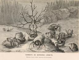 Combats de bernards-l'Ermite en 1866. Source : http://data.abuledu.org/URI/59457022-combats-de-bernards-l-ermite-en-1866