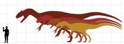 Comparaison de la taille humaine et de plusieurs dinosaures. Source : http://data.abuledu.org/URI/53394429-comparaison-de-la-taille-humaine-et-de-plusieurs-dinosaures
