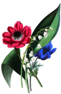Composition florale de mai en 1836. Source : http://data.abuledu.org/URI/53edc55f-composition-florale-de-mai-en-1836