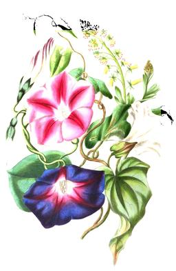 Composition florale en 1836. Source : http://data.abuledu.org/URI/53ecf970-composition-florale-en-1836