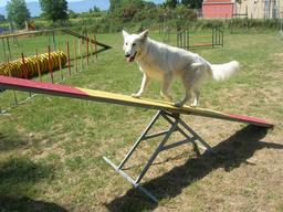 Concours d'agilité canine 2. Source : http://data.abuledu.org/URI/5314c42d-concours-d-agilite-canine-2