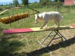 Concours d'agilité canine 3. Source : http://data.abuledu.org/URI/5314c488-concours-d-agilite-canine-3