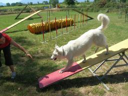 Concours d'agilité canine 4. Source : http://data.abuledu.org/URI/5314c4d7-concours-d-agilite-canine-4