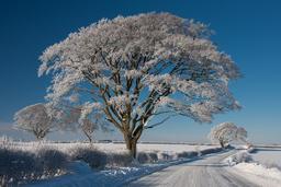 Conte d'hiver. Source : http://data.abuledu.org/URI/50fddc27-conte-d-hiver