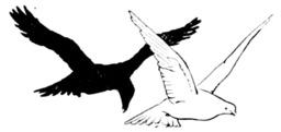 Conte indien du pigeon et du corbeau. Source : http://data.abuledu.org/URI/5196903c-conte-indien-du-pigeon-et-du-corbeau