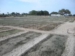 Coopérative agricole dans l'île de Carabane. Source : http://data.abuledu.org/URI/549364aa-cooperative-agricole-dans-l-ile-de-carabane