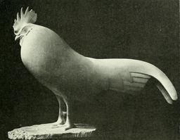 Coq endormi. Source : http://data.abuledu.org/URI/52b1ff9f-coq-endormi