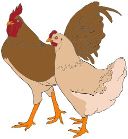 Coq et poule. Source : http://data.abuledu.org/URI/5049c77d-coq-et-poule