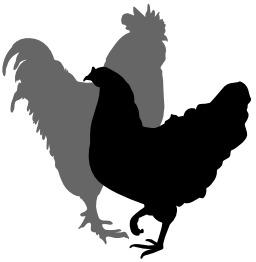 Coq et poule. Source : http://data.abuledu.org/URI/5049c7ba-coq-et-poule