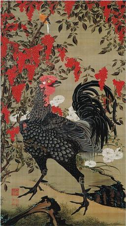 Coq japonais. Source : http://data.abuledu.org/URI/51ef0318-coq-japonais