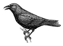 Corbeau. Source : http://data.abuledu.org/URI/53e9eef5-corbeau
