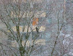 Corbeau sous la neige dans un arbre en ville. Source : http://data.abuledu.org/URI/54cd0a97-corbeau-sous-la-neige-dans-un-arbre-en-ville