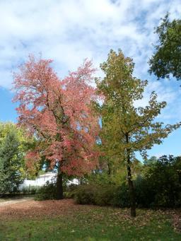 Couleurs d'automne. Source : http://data.abuledu.org/URI/5458c42d-couleurs-d-automne