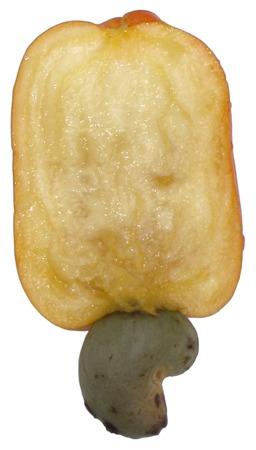 Coupe de pomme de cajou. Source : http://data.abuledu.org/URI/5209fad3-coupe-de-pomme-de-cajou